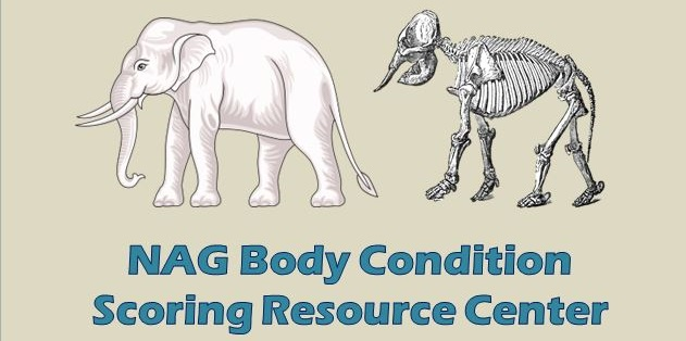 Body Condition Scoring Resource Center