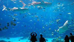 Job posting: Georgia Aquarium Commissary Manager